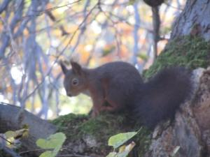 Red squirrel in the grounds of Schloss Fuerstenried in Munich, where we held our autumn board meeting